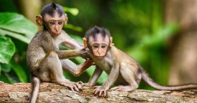 How will cloning monkeys help science?